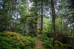 STUNNING WOODLAND FOREST LANDSCAPE CANVAS PICTURE POSTER PRINT UNFRAMED 2334