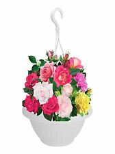 Set Of 2 High Quality White Hanging Baskets Planter Plants Flower Pot Garden