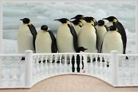 Huge 3D Balcony Penguins Huddling Wall Stickers Mural Wallpaper 196