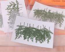 12pcs Dried Artemisia Leaf Branch for Organic Floral Collection DIY Decoration