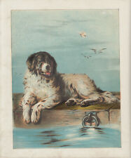 NEWFOUNDLAND DOG LAYING ON PIER SEASHORE ANTIQUE LITHOGRAPH ART PRINT 1875