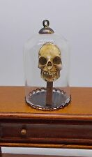 Dolls house miniature Skull in Dome Museum / Curiosity