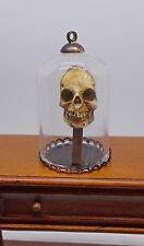 Casa de muñecas en miniatura de cráneo en cúpula Museo/curiosidad