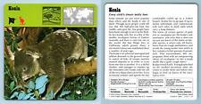 Koala - Mammals - 1970's Rencontre Safari Wildlife Card