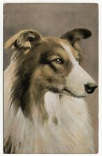 ROUGH COLLIE  HEAD STUDY OLD DOG ART POSTCARD