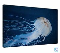 Jellyfish Blue Animals Jelly Fish Seen Deep Sea Canvas Print Wall Art Picture
