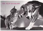 Ansichtskarte kleiner Hund namens Killer in seiner Hundehütte La Terreur