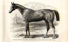 Stampa antica CAVALLO PUROSANGUE INGLESE ORLANDO 1892 Old print horses