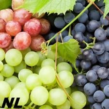 50 Grape Fruit Seeds 5 Variety Sweet Heirloom Natural Organic Garden Home Plant