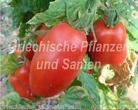 🔥 🍅 Paste  italienische Flaschen-Tomate Tomaten 10 frische Samen Balkon Kübel