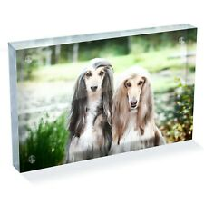 "Beautiful Afghan Hounds Dog Photo Block 6 x 4"" - Desk Art Office Gift #15880"