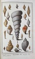 1784 -  Belles planches en couleurs de coquillages, fossiles marins,etc...