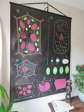 VINTAGE DR AUZOUX SOUGY PULL DOWN SCHOOL WALL CHALK CHART OF PLANT & ANIMAL CELL