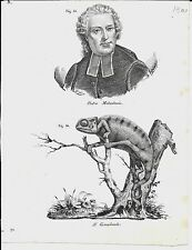 1837ca PIETRO METASTASIO- CAMALEONTE 2 litogr Magazzino Pittorico Chamaeleonidae