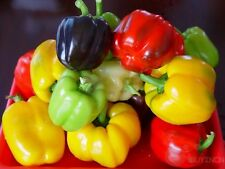 Sweet colorful Pepper Seed 10 seeds Vegetable Garden yard Patio Plants balcony
