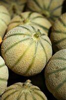☺50 graines de melon Charentais
