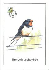 FDC 2475 - Oiseau Buzin sur gravure format A4 !