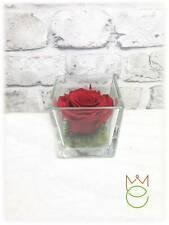 Rosa Stabilizzata Rossa 8x8 cm Cubo in Vetro Idea Regalo Festa della Mamma