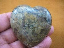 DP4-32 Real DINOSAUR POOP carved Puffy heart Utah Dino Coprolite Fossil display