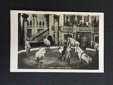 Vintage Circus Postcard - Emily Paulo 's Ponies