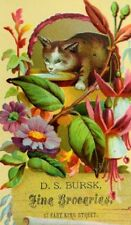 Lovely Bright Cat Drinking Milk Flowers D.S. Bursk Fine Groceries Trade Card P50