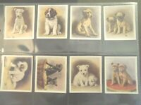 1936 OUR PUPPIES dog puppy dogs Godfrey Phillips Tobacco Card Set of 30 cards