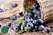 10 seeds of Blueberry - VACCINIUM MYRTILLUS - Plus GIFT 5 seeds of Sunflower
