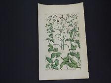 Sir John Hill, Botanical, The Vegetable System 1761-1775 Dutch Agrimony #12