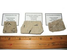 More details for ordovician silurian devonian graptolite fossil collection 8 different species
