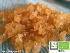 100g XXL Organic Probiotic Live Water Kefir Grains Tibicos by Kombuchaorganic®