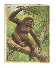 Hassan the oriental smoke cigarette tobacco card gorilla in a tree