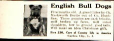 1912 English Bull Dog 5 months old Puppy Vintage Print Ad 762