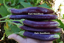 Eggplant Indian Long Skinny Purple - Delicious & High-Yield Eggplant - 15 Seeds!