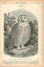 Chouette Harfang des neiges Bubo scandiacus Oiseau GRAVURE ANTIQUE PRINT 1879