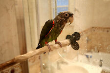 Shower Nu Perch for Small to Medium Parrots and Parakeets