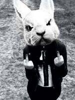 Vintage Insane Bunny Photo 793 Oddleys Strange & Bizarre