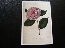 FRANCE -carte reproduction (lyon jardin botanique camelia lacene) (cy68)french