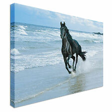 galloping horse  Canvas Wall Art Picture Print