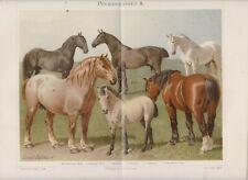 1894 HORSES HORSE BREEDS Antique Engraving Lithograph Print