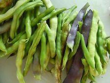 Bean, BLUE LAKE BUSH, 50 Heirloom, Non-gmo Seeds.. FREE SHIPPING