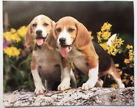 Pups Beagle Dog Lithograph Poster Print Vintage Wall Art PH504 Puppies Hunting
