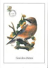 FDC 2526 - Oiseau Buzin sur gravure format A4 !