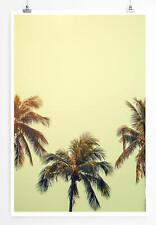 Poster Drei Vintage Palmen