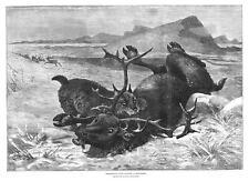 NORWAY Norwegian Lynx Killing a Reindeer - Antique Print 1885