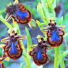 HB- 100Pcs Orchid Seeds Cymbidium Bonsai Rare Flower Plant Garden Balcony Decor