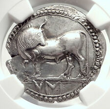 SYBARIS LUCANIA Authentic ARCHAIC 550BC Silver Greek Stater Coin BULL NGC i73337