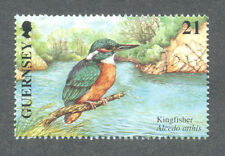 kingfisher-Birds-Water Birds mnh single-Guernsey single value(2001)