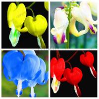 100 PCS Seeds Rare Perennial Spectabilis Dicentra Plants Bleeding Heart Flowers