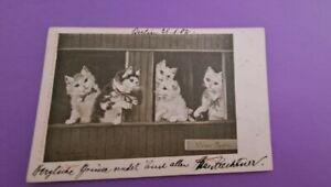 Vintage Cat Postcard. Five cats at windows. German. Written 1902.