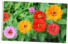 Colorful Floral Flowers Zinnia Spring Summer Nature Seasonal 3x5 Feet Flag, Pol